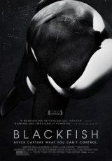 Blackfish online (2013) Español latino descargar pelicula completa